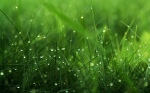 dew_grass