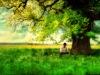 """""""Tidaklah aku di dunia ini melainkan (hanya) seperti seorang musafir yang berteduh di bawah pohon lalu beristirahat dan kemudian meninggalkannya (pohon tersebut).""""  (HR. At-Tirmidzi no.3277)"""